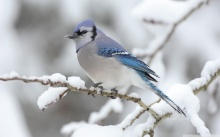beautiful_bird_winter-1280x800