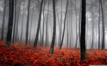 bloody_forest-1280x800