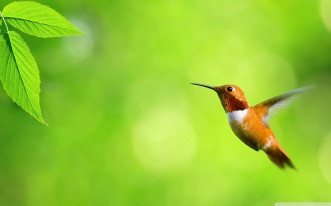 hummingbird_2-1280x800