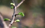 Green Hope 1920x1200